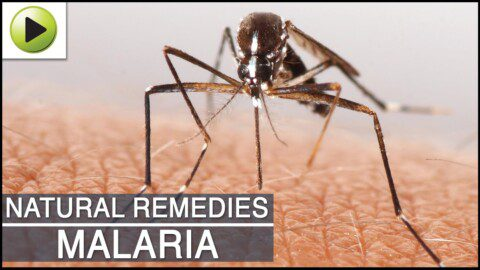 Malaria- Natural Ayurvedic Home Remedies