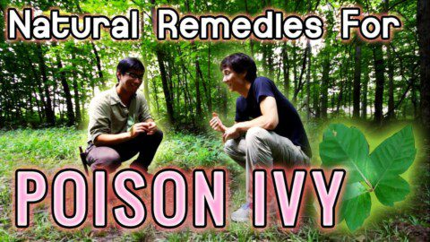 Natural Remedies for Poison Ivy | Summer Camping Wild and Herbal Medicine and First Aid